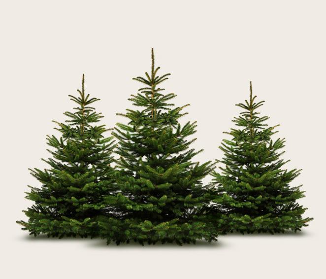 Baumarkt Tannenbaum.Weihnachtsbaum Kaufen In Mainz Christbaum Center